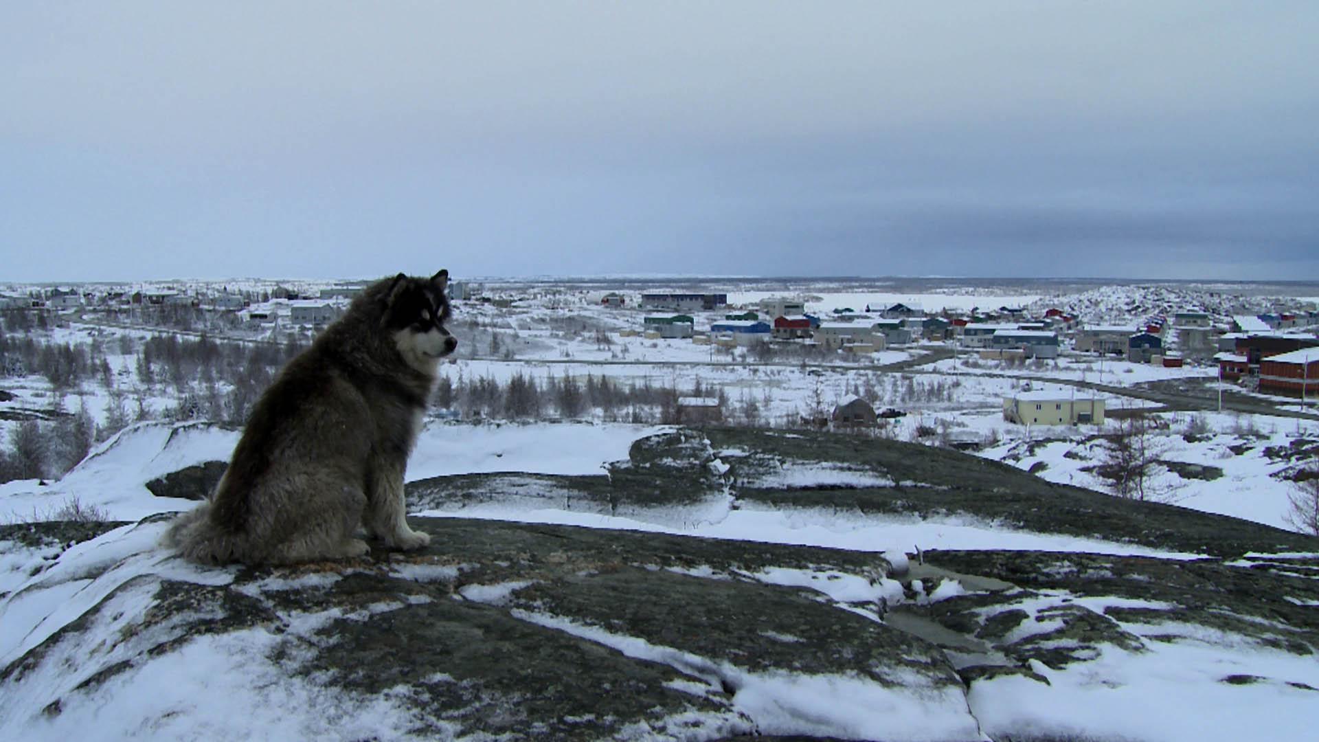 deux-vies-inuit-Chien Kuujjuaq